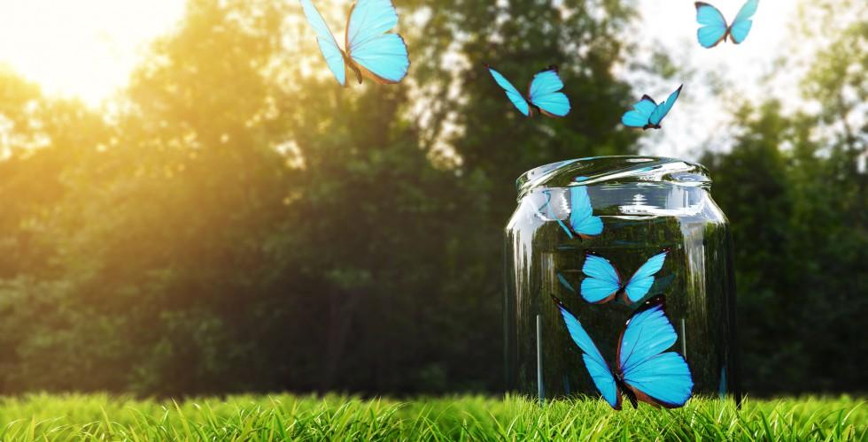 Butterflies Take Off From Glass Jar